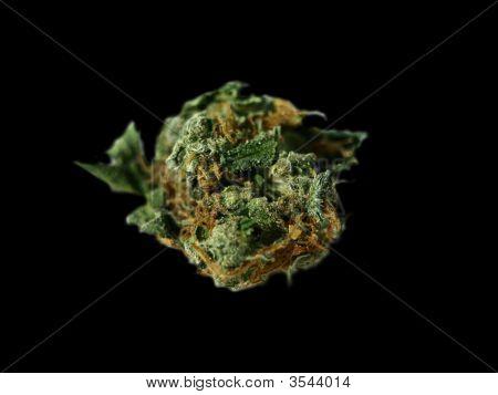 Marijuana In Zoom