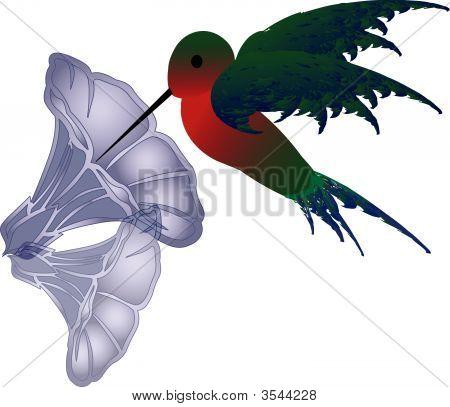 Hummingbird.Eps