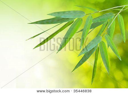 bambbo leaf