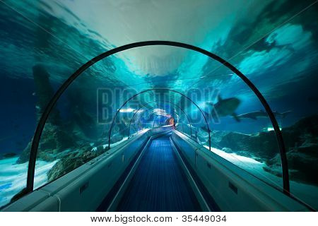Aquarium Tunnel Underwater