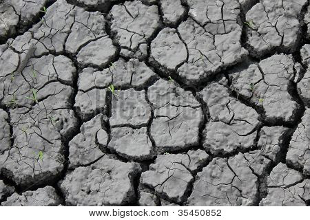 Green Plants Growing From Cracked Earth