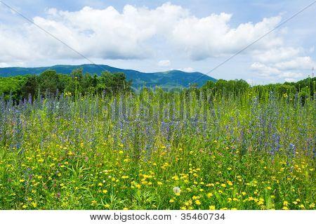 Sommer Blumen Feld gegen den berühmten russischen Berg Vorobey