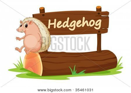 illustration of Hedgehog and name plate on a white