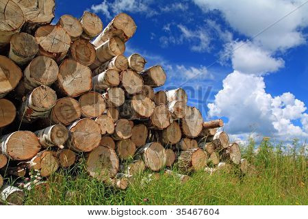 timber in a field near the forest