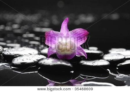 naturaleza muerta con macro de orquídea en guijarro