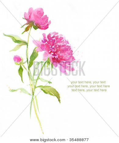 Painted watercolor card with pink peonies and place for text