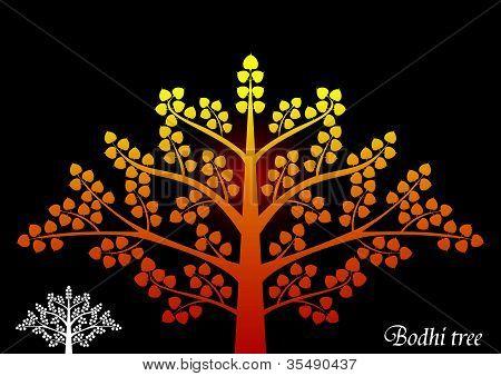 Árvore de Bodhi.