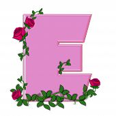 picture of climbing roses  - The letter E in the alphabet set Blushing Roses is soft pink - JPG