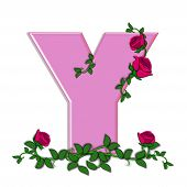 image of climbing roses  - The letter Y in the alphabet set Blushing Roses is soft pink - JPG
