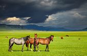 picture of bronco  - Mountain landscape with grazing horses and storm clouds - JPG