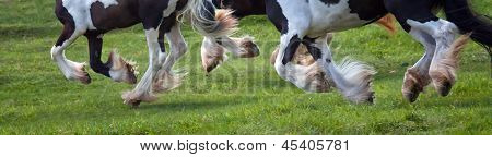 Horses hooves in motion