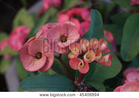 Pink Flowers in a bunch