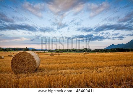 Bale Of Hay On The Wheat Field, With Dramatic Morning Sky