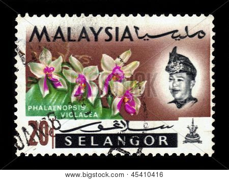 Postage Stamp Malaysia 1965 Phalaenopsis Violacea, Orchid Endemic Flower