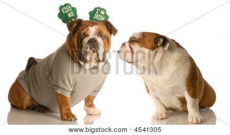 St Patricks Bulldogs Kiss Me I'm Irish