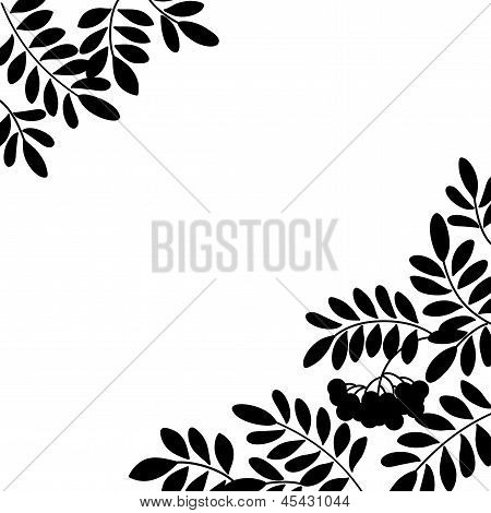 Rowanberry background, silhouette