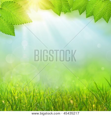 Green Natural Backgrounds