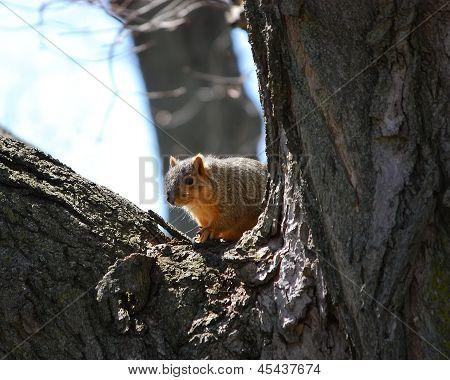 A Squirrel Looking