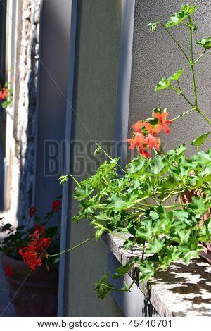 Potted flowers on Italian street