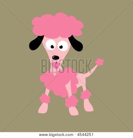 Stylish Poodle