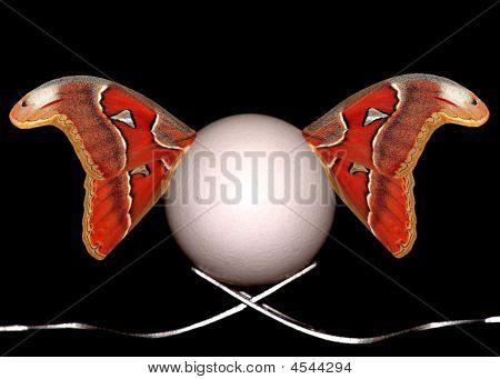 Eggwings