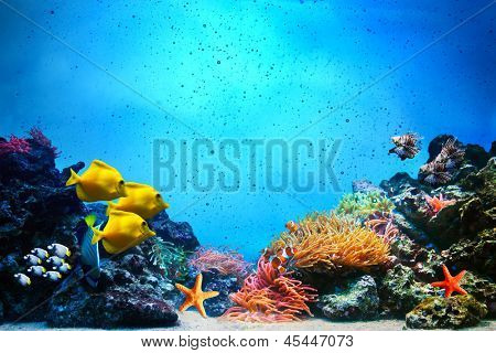 Underwater scene. Coral reef, colorful fish groups and sunny sky shining through clean ocean water. Space underwater for you to fill or just use standalone. High res
