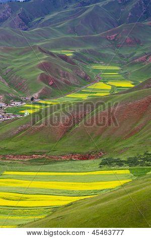 Oilseed Terraced Field