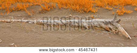 Sand Dunes In Jasper Lake