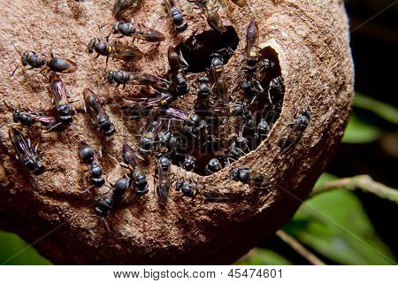 Wasp nest colony
