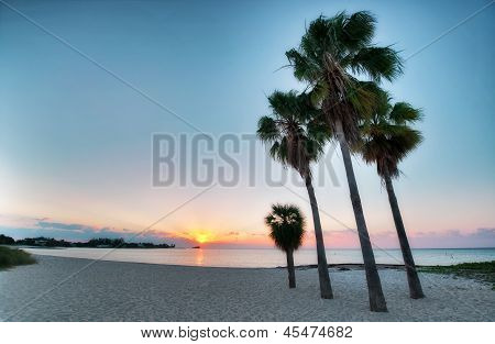 Four Palms At The Beach