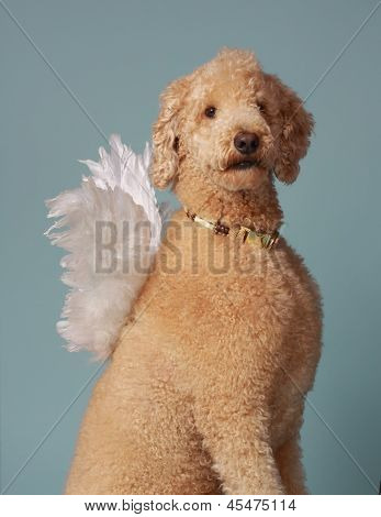 Angelical Poodle Beige