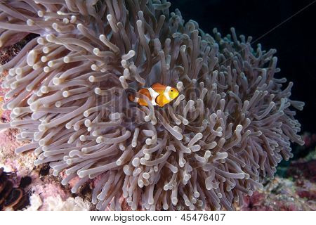 enchanting beauty of the reef
