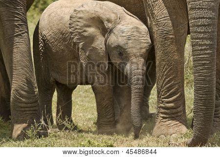 Elephant Protection