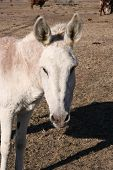 picture of jack-ass  - A donkey on a farm - JPG
