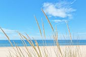 stock photo of kindness  - On the summer beach kind of grass on a background of sky and sea - JPG