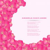 Flower background from pink rose petal.