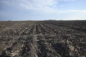 picture of rich soil  - Rich black midwestern soil in plowed field ready for spring planting - JPG