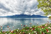foto of montre  - Flowers against mountains and lake Geneva from the Embankment in Montreux - JPG