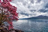 image of montre  - Flowers against mountains and lake Geneva from the Embankment in Montreux - JPG