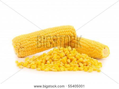 Two corncobs and handful canned corns.