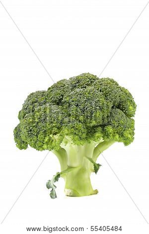 Fresh healthy brocoli