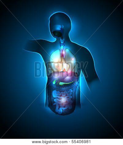 Colorful anatomy
