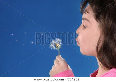 Child Blowing Dandylions Against Blue Background
