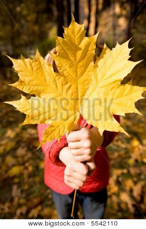 Giving Maple Leaf