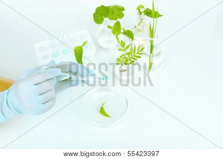 Plants in test tubes. Concept pf science researching. Isolated on white