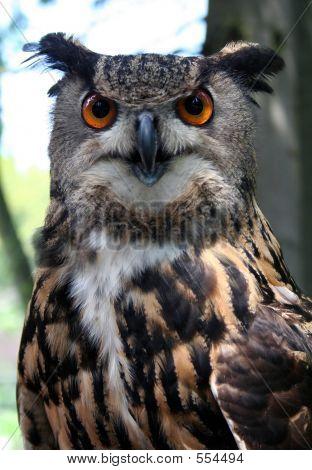 Stock Owl
