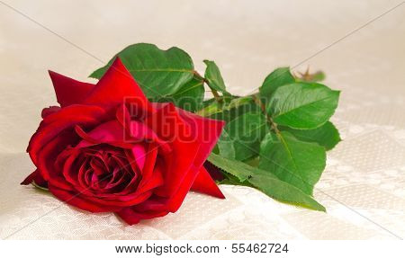 Flower Red Rose With The Leaves On The Background Of White Silk.