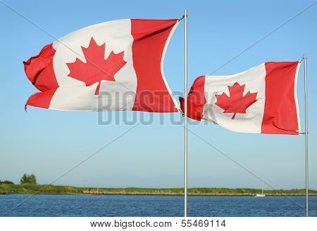 Canadian Flags in Sunshine