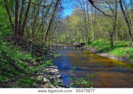Spring On The Little Forest River