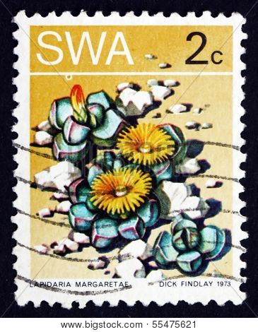 Postage Stamp South West Africa 1973 Karoo Rose, Succulent Plant